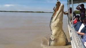 brutus the croc