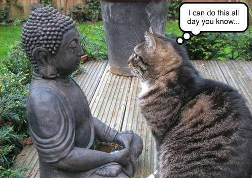 Image result for cats meditate